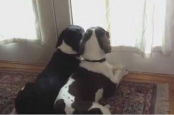 Soli a casa: come si comportano i nostri cani