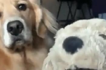 Un cane geloso