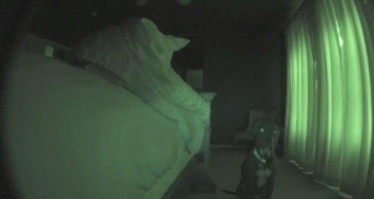 Un cane che sa come svegliare il suo umano: ecco la sveglia di Grey