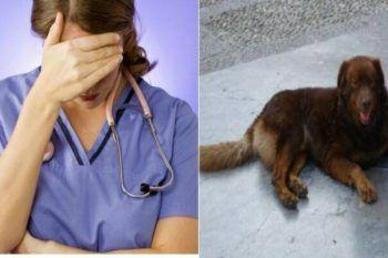 Punito in modo esemplare il veterinario tanto criticato