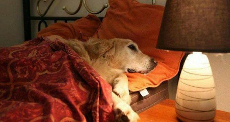 Domanda all'hotel se può portare il suo cane. La risposta che riceve è incredibile!