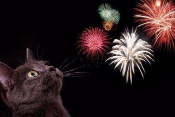 Botti di Capodanno: come aiutare gli amici gatti