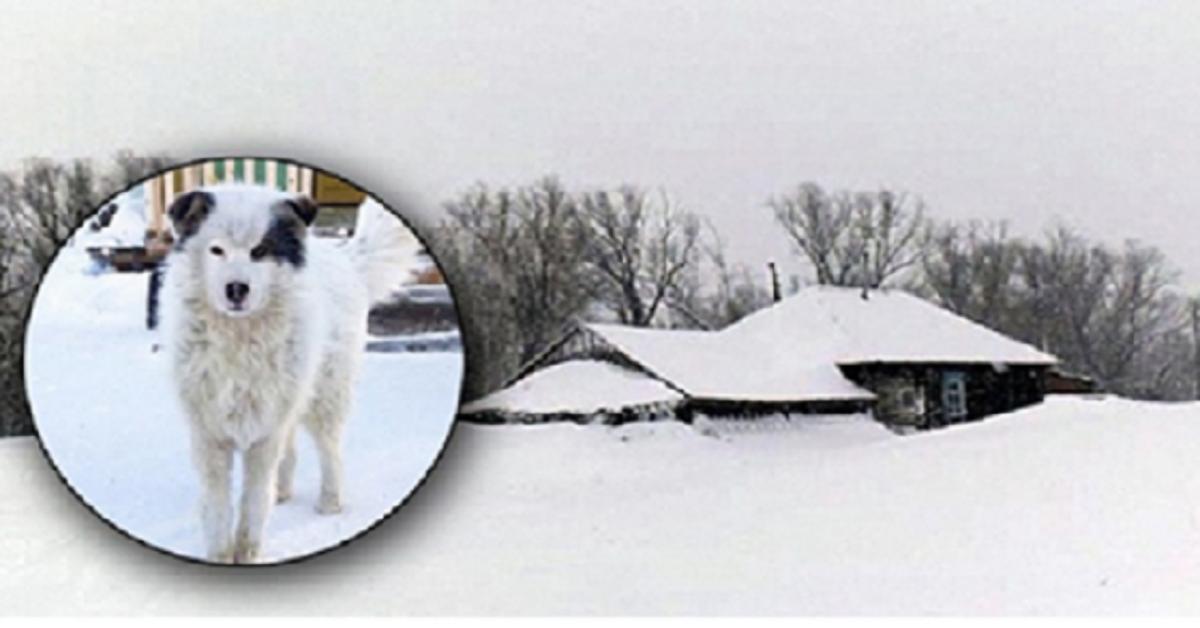 Husky salva bambino abbandonato