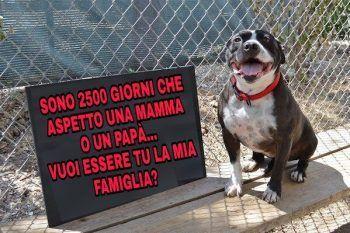 Cane solitario si siede in un rifugio per 2531 giorni in attesa di qualcuno che…