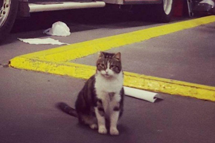 Pompiere adotta un gattino randagio: non si immaginava sarebbe diventato un killer