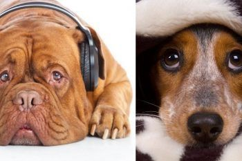 Consigli utili per proteggere i cani dai botti Capodanno