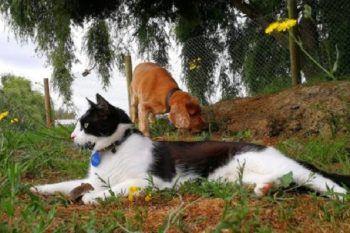 Un cane, un gatto e un topo che vanno d'amore e d'accordo