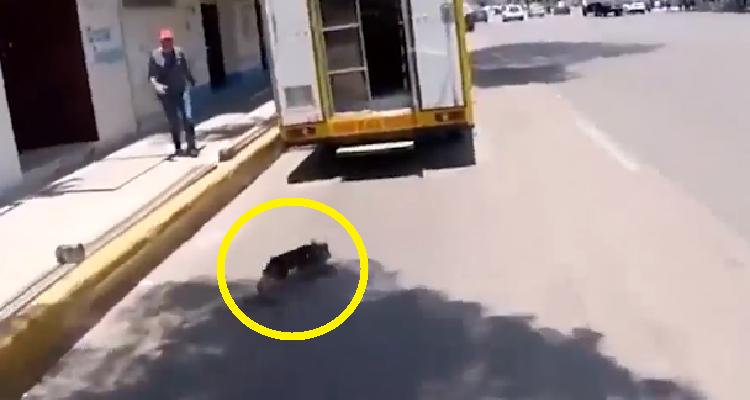 La folle corsa di un cagnolino viene fermata da un ciclista