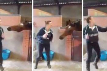 Il ballo del cavallo