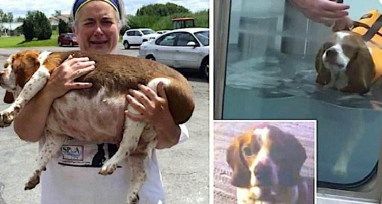 Chiedeva di sopprimere il suo cane perché era obeso