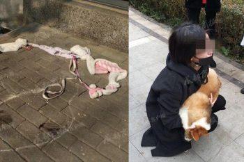 Butta il suo cane dalla finestra: la ragazza è decisa a denunciarla