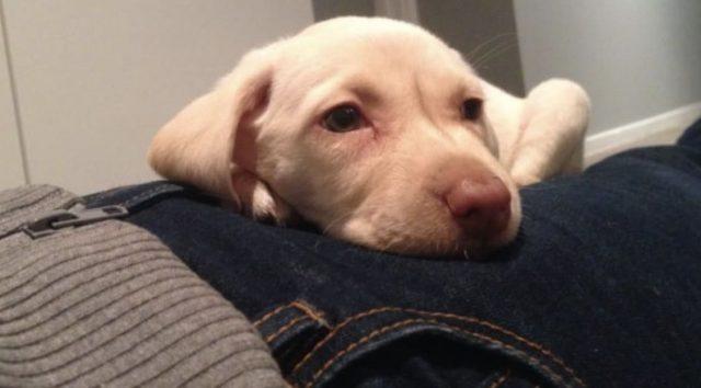 cane rubato ritorna in famiglia