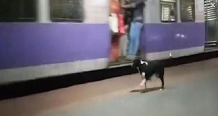 Il mistero della cagnolina che aspetta alla stazione