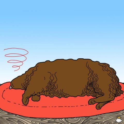 cane in letargia
