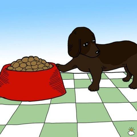 cane senza appetito