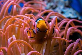 Giappone, l'acquario chiude perché i visitatori non vogliono la sofferenza degli animali