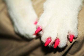 Claw caps, le finte unghie dei gatti che fanno venire i brividi