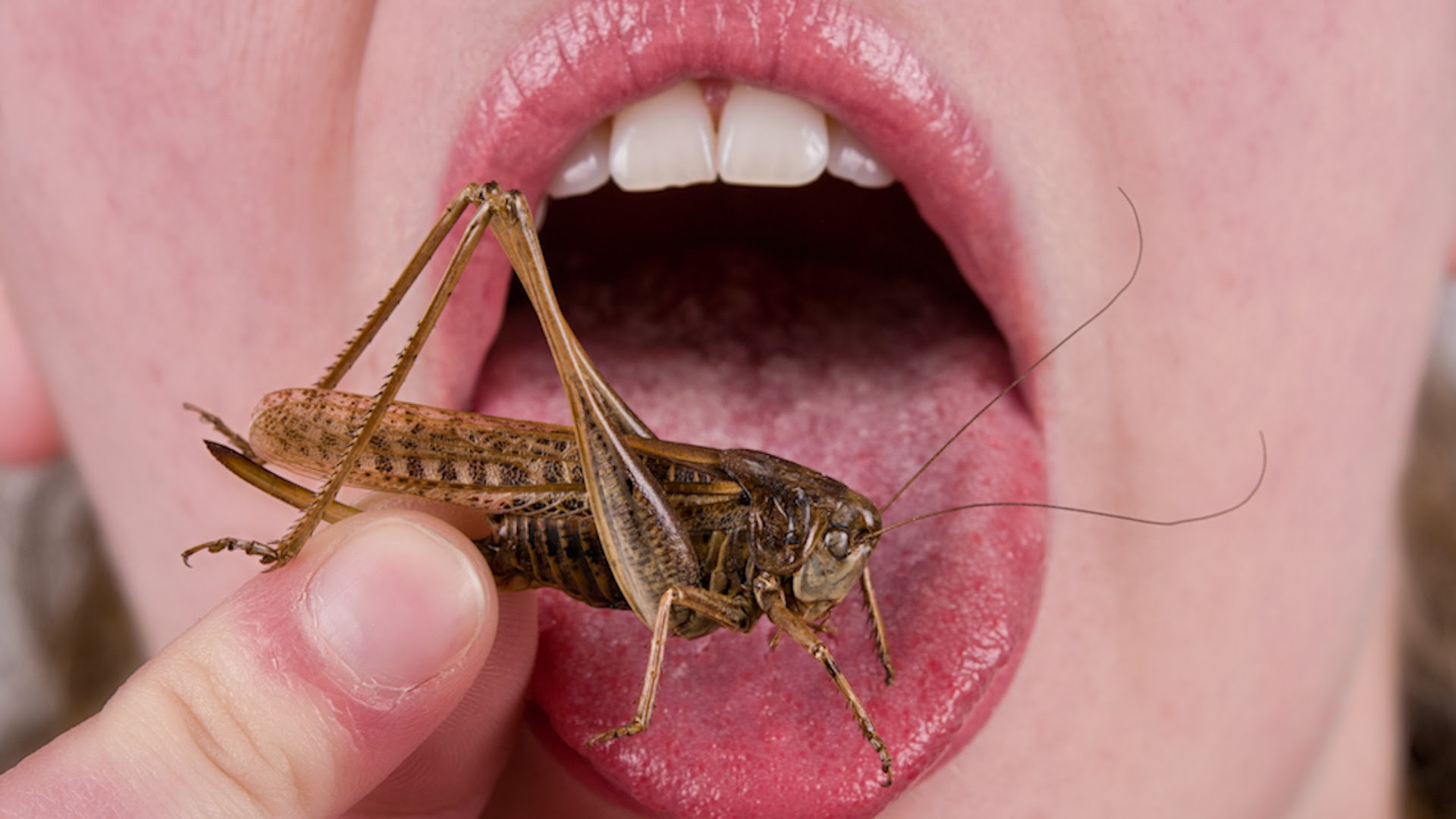 Dove mangiare insetti in Italia