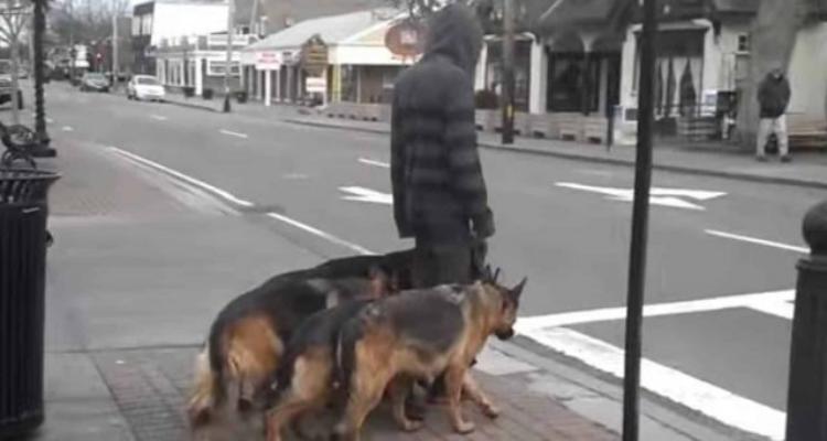 Se pensi che quest'uomo stia camminando con i suoi cani, guarda più da vicino