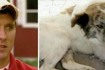 3 cani salvano la vita a Chris ed ai suoi compagni