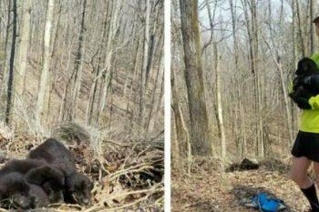 I cuccioli abbandonati nella foresta