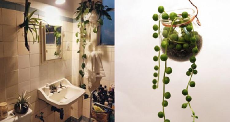 Le migliori piante che possono vivere bene in bagno