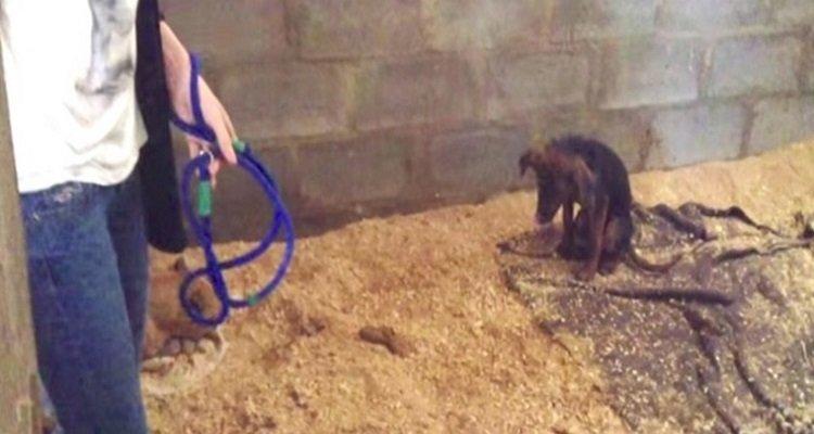 Simba doveva essere soppresso invece una volontaria decide di salvarlo