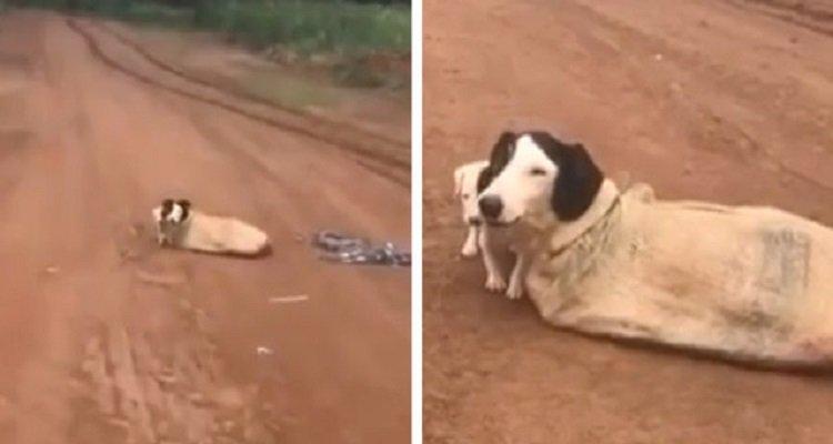 La cagnolina chiusa nel sacco nascondeva un segreto accanto a lei