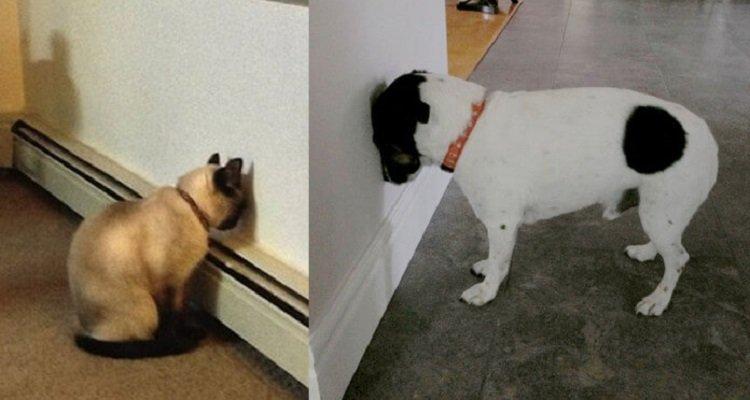 Se vedete il vostro animale domestico facendo così portatelo subito dal veterinario