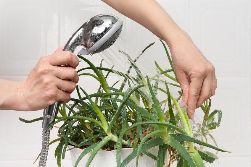 Le migliori piante che possono vivere bene in bagno | Bigodino
