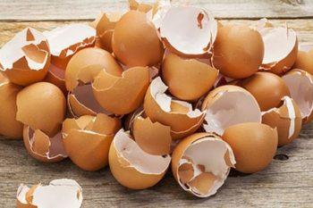 I modi incredibili per utilizzare i gusci delle uova