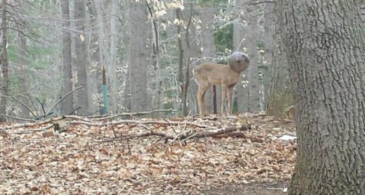 """""""Non era un cervo comune, il suo aspetto... dovevo avvicinarmi... quando l'ho capito..."""""""