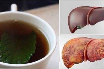 Le bevande pre sonno che puliscono il fegato e bruciano i grassi