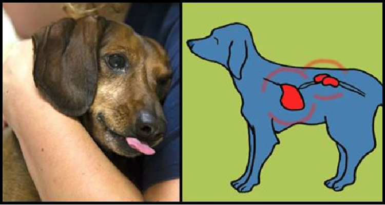 Motivi per cui il tuo cane vomita e quando devi chiamare il veterinario