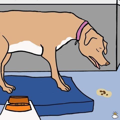 Motivi Per Cui Il Tuo Cane Vomita E Quando Devi Chiamare Il