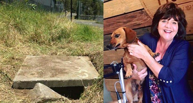 Cane conduce la sua amica umana in un pozzo per salvare un neonato