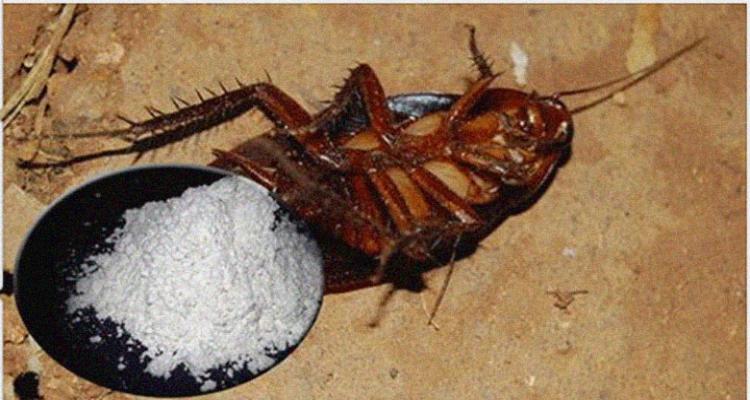 Problemi di scarafaggi, formiche e altri insetti? Ecco una soluzione naturale