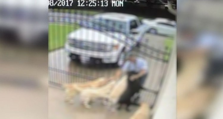 Il postino ama i cani