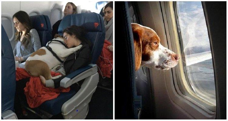 La compagnia americana Delta accetta i cani a bordo: un esempio per tutti