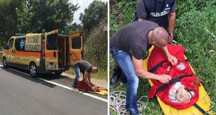Sardegna, cane lanciato dal cavalcavia ad Alghero in un sacco: è grave