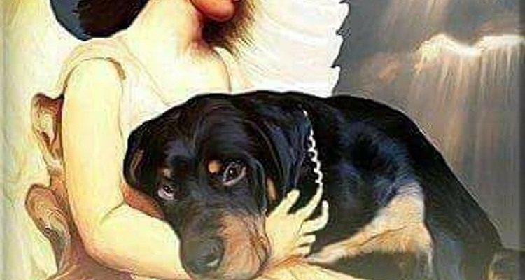 Il testamento di un cane