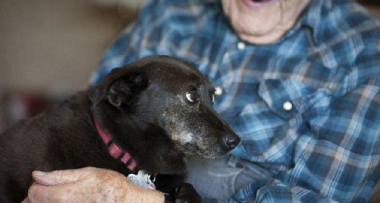 Cane trasforma la vita di un uomo di 104 anni