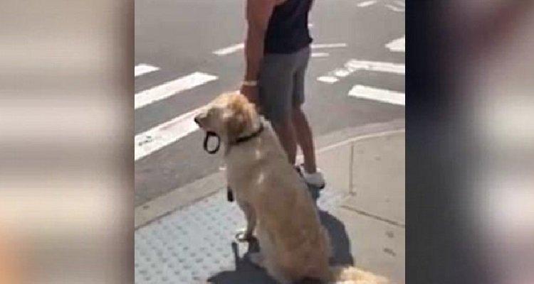 Il cane che da la mano