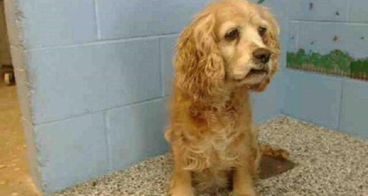 Povera Cookie, abbandonata e rimpiazzata con un cucciolo