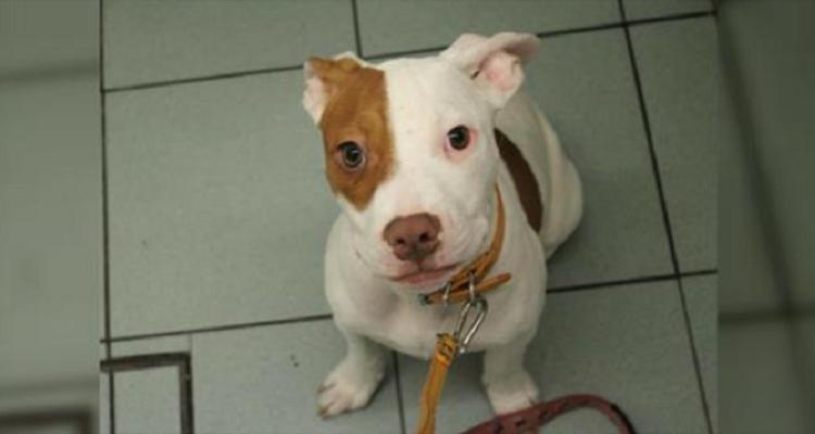 Nessuno voleva Ivor perché era disobbediente ma il povero cane era sordo