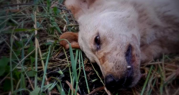 La vita trionfa: Luce, la cagnolina incaprettata e seppellita viva partorisce i suoi cuccioli
