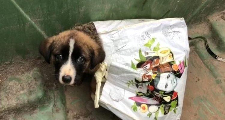 Povero cucciolo