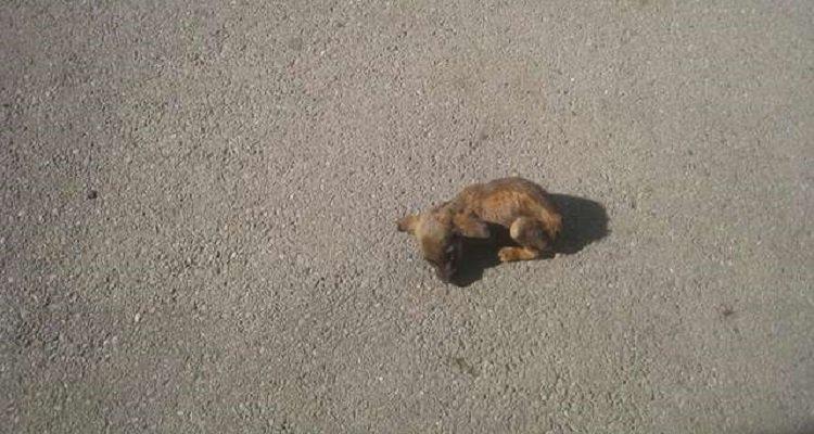 Una piccolissima cucciola aspettava in mezzo alla strada qualcuno che la salvasse