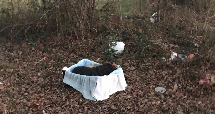 I soccorritori si avvicinano al cane abbandonato in strada e scoprono che non era solo