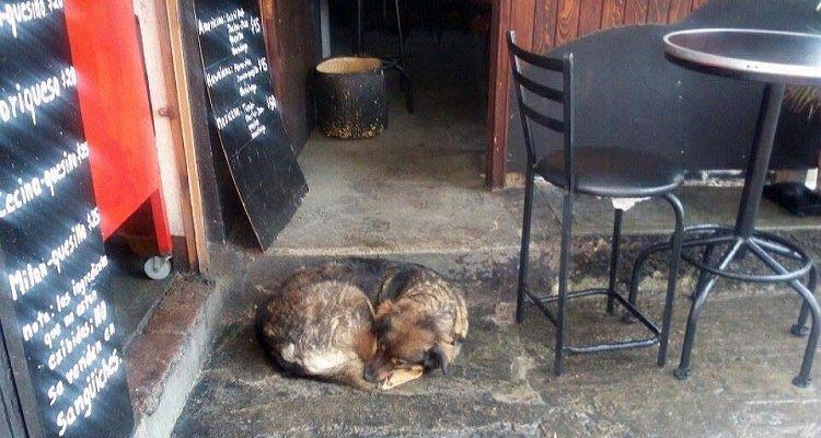 Il proprietario di un ristorante difende la randagia Lola